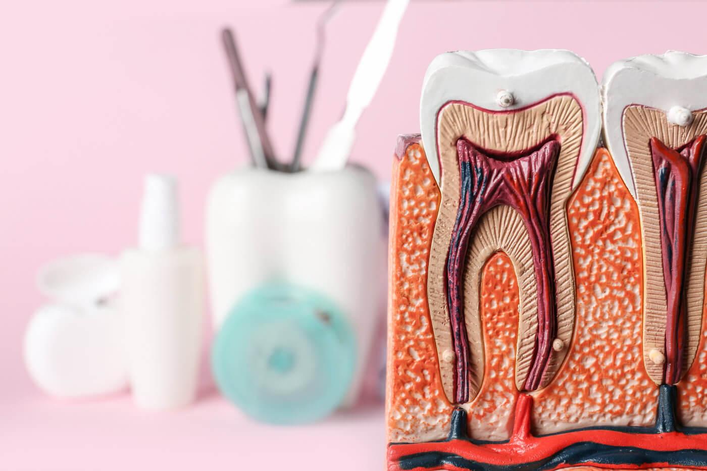 Was ist Zahnschmelz und wie kann ich verhindern dass er sich abbaut
